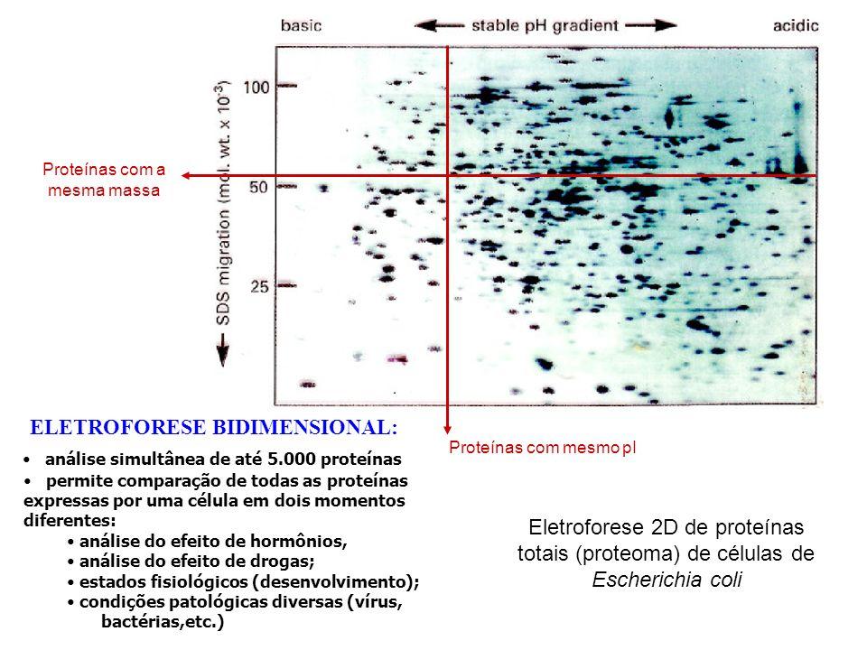 ELETROFORESE BIDIMENSIONAL: análise simultânea de até 5.000 proteínas