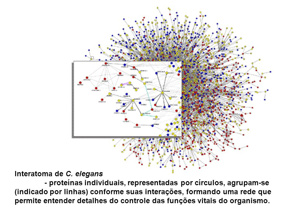 Interatoma de C. elegans