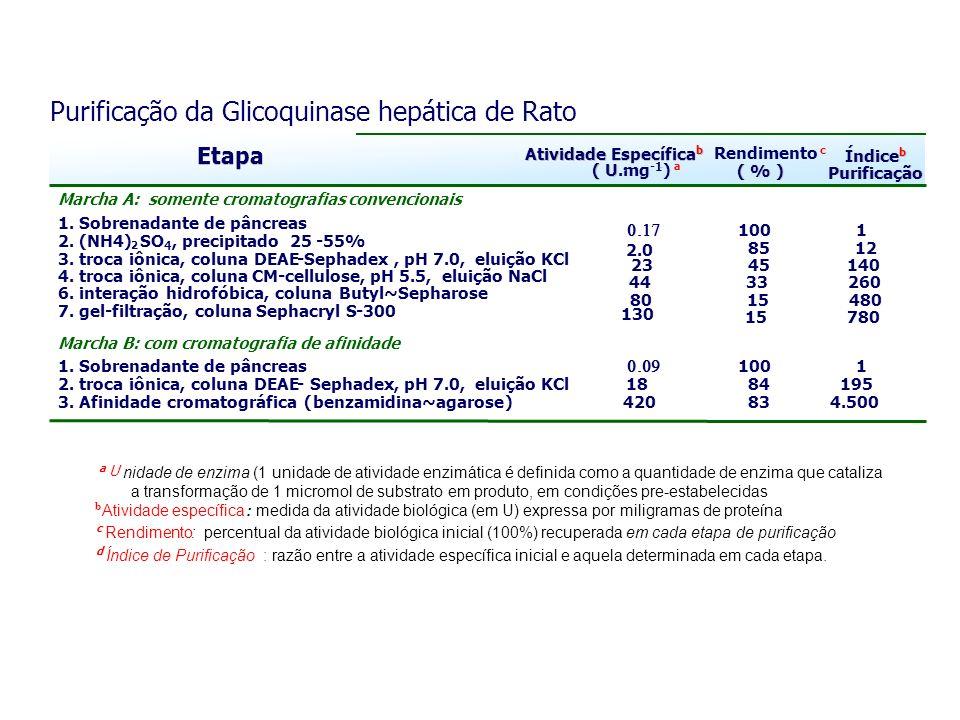 Purificação da Glicoquinase hepática de Rato