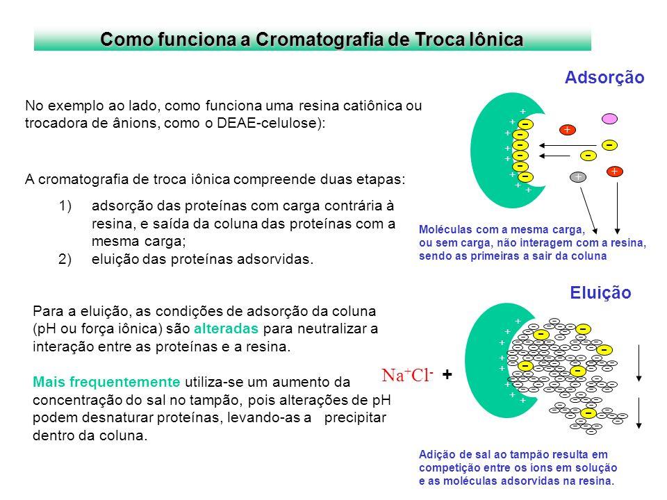 Como funciona a Cromatografia de Troca Iônica