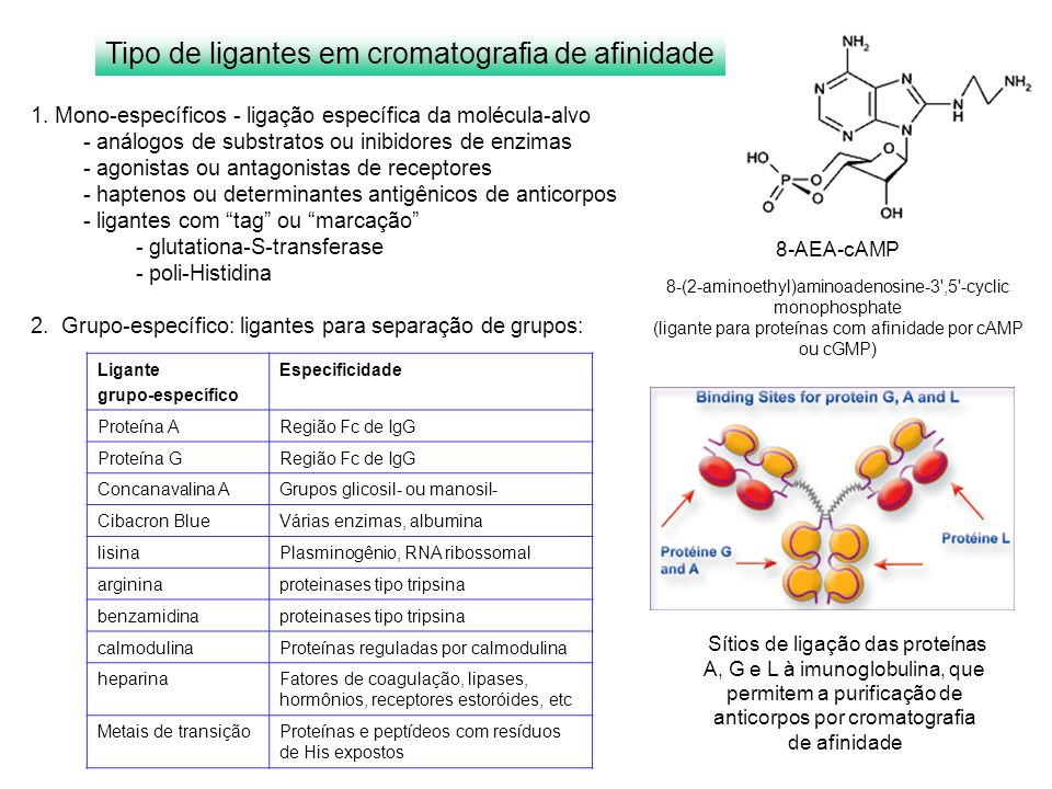 Tipo de ligantes em cromatografia de afinidade