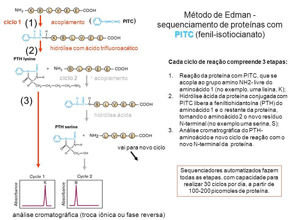 ciclo 1ciclo 2. hidrólise com ácido trifluoroacético. hidrólise ácida. vai para novo ciclo. análise cromatográfica (troca iônica ou fase reversa)