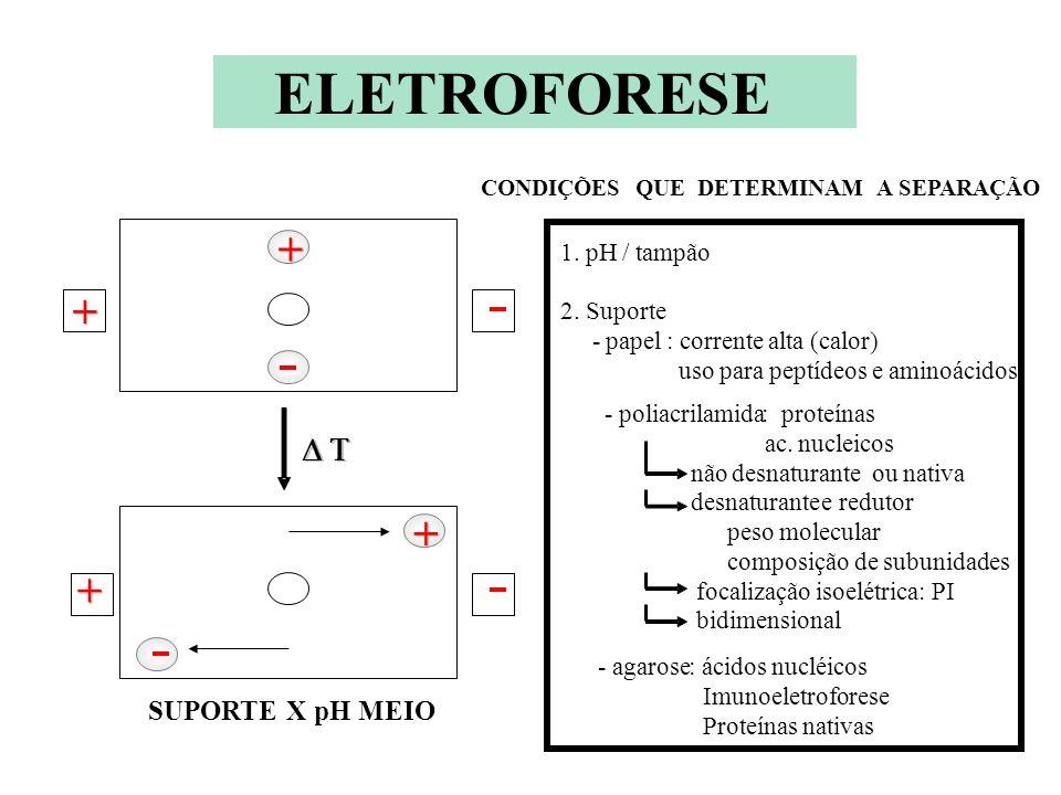ELETROFORESE ELETROFORESE + D T SUPORTE X pH MEIO 1. pH / tampão