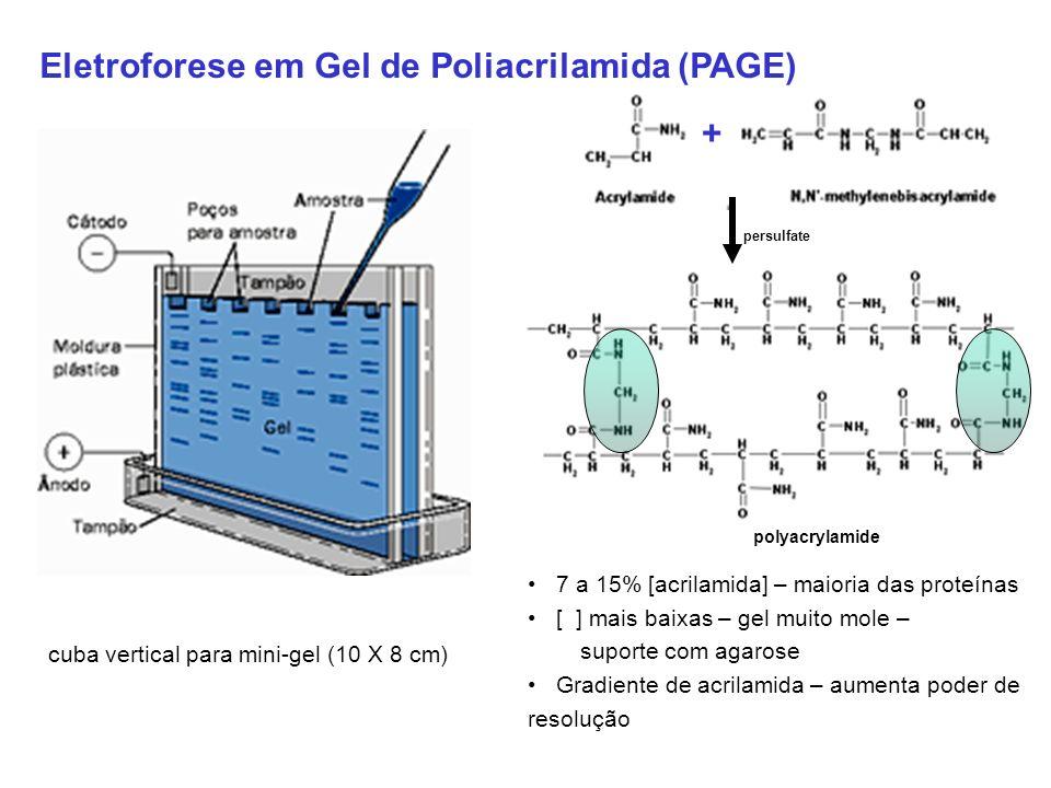 Eletroforese em Gel de Poliacrilamida (PAGE)