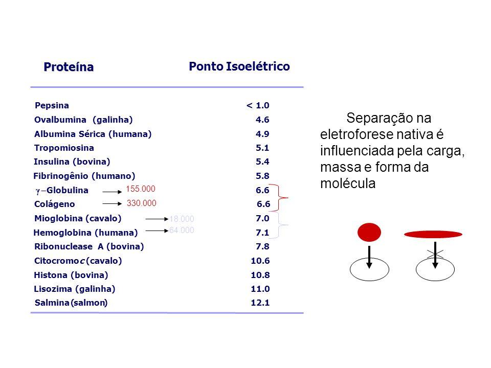 Proteína Ponto Isoelétrico. Pepsina. < 1.0. Ovalbumina. (galinha) 4.6. Albumina. Sérica. (humana)