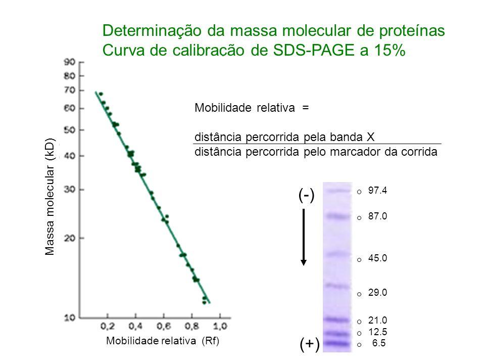 Determinação da massa molecular de proteínas