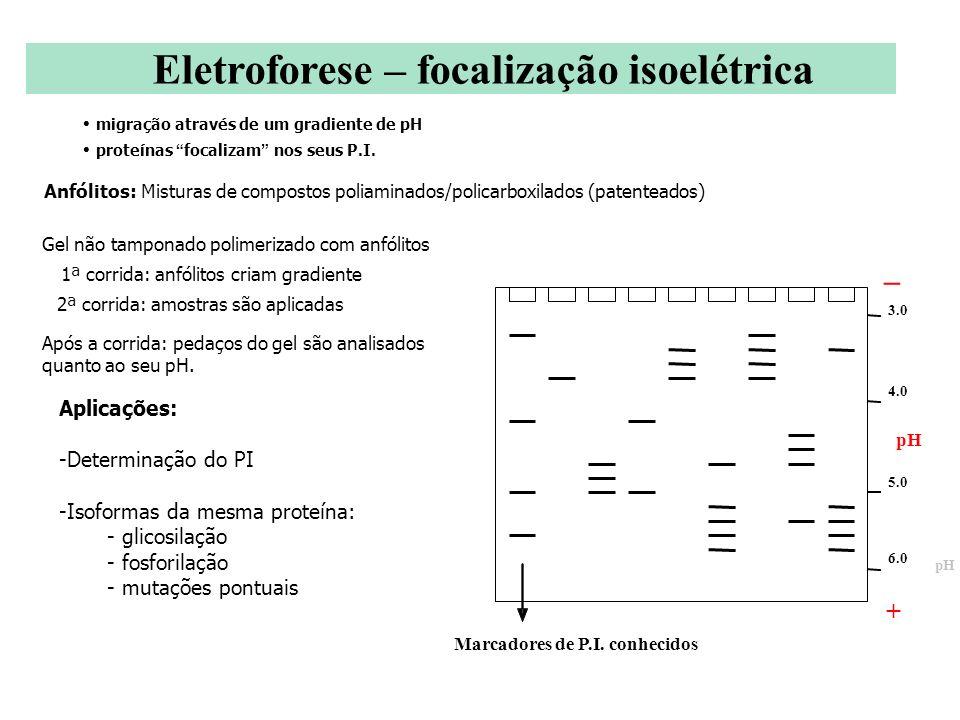 _ Eletroforese – focalização isoelétrica + Aplicações: