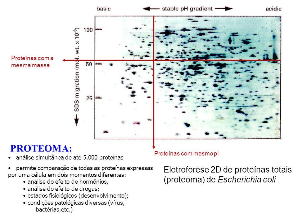 Proteínas com mesmo pI Proteínas com a mesma massa. PROTEOMA: análise simultânea de até 5.000 proteínas.