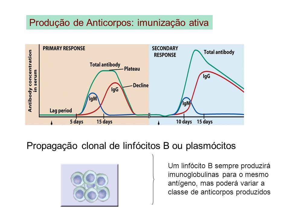 Propagação clonal de linfócitos B ou plasmócitos
