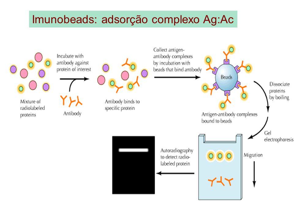 Imunobeads: adsorção complexo Ag:Ac