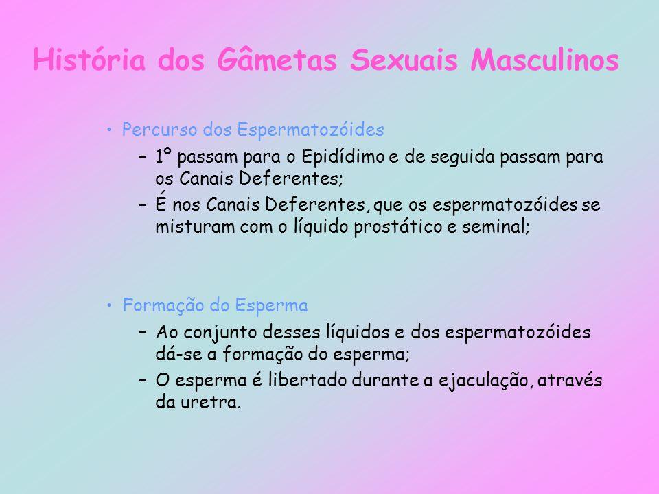 História dos Gâmetas Sexuais Masculinos