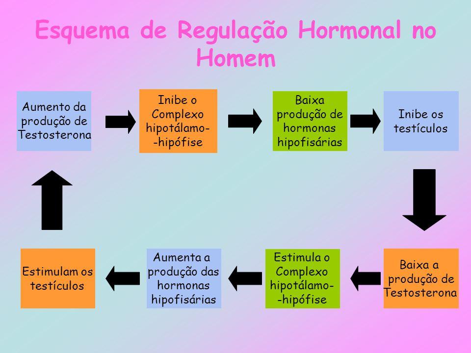 Esquema de Regulação Hormonal no Homem