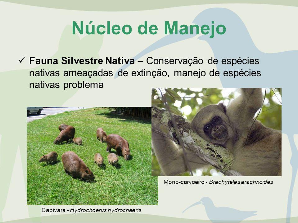 Núcleo de Manejo Fauna Silvestre Nativa – Conservação de espécies nativas ameaçadas de extinção, manejo de espécies nativas problema.