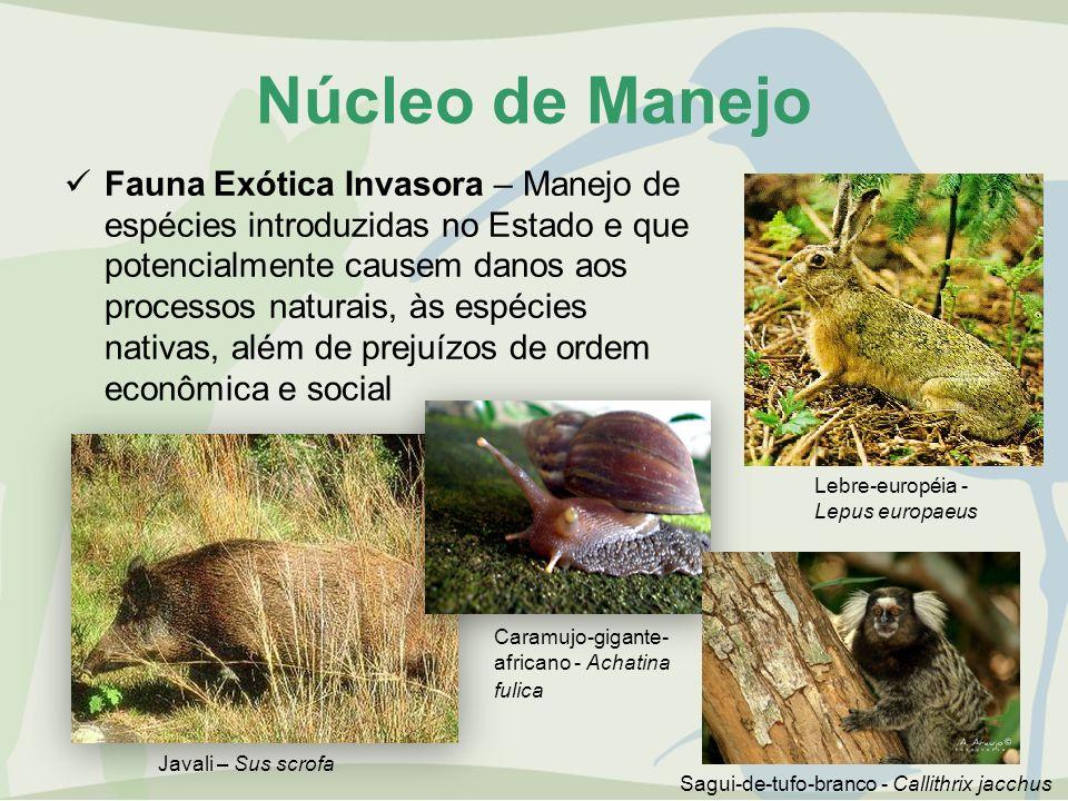 Núcleo de Manejo