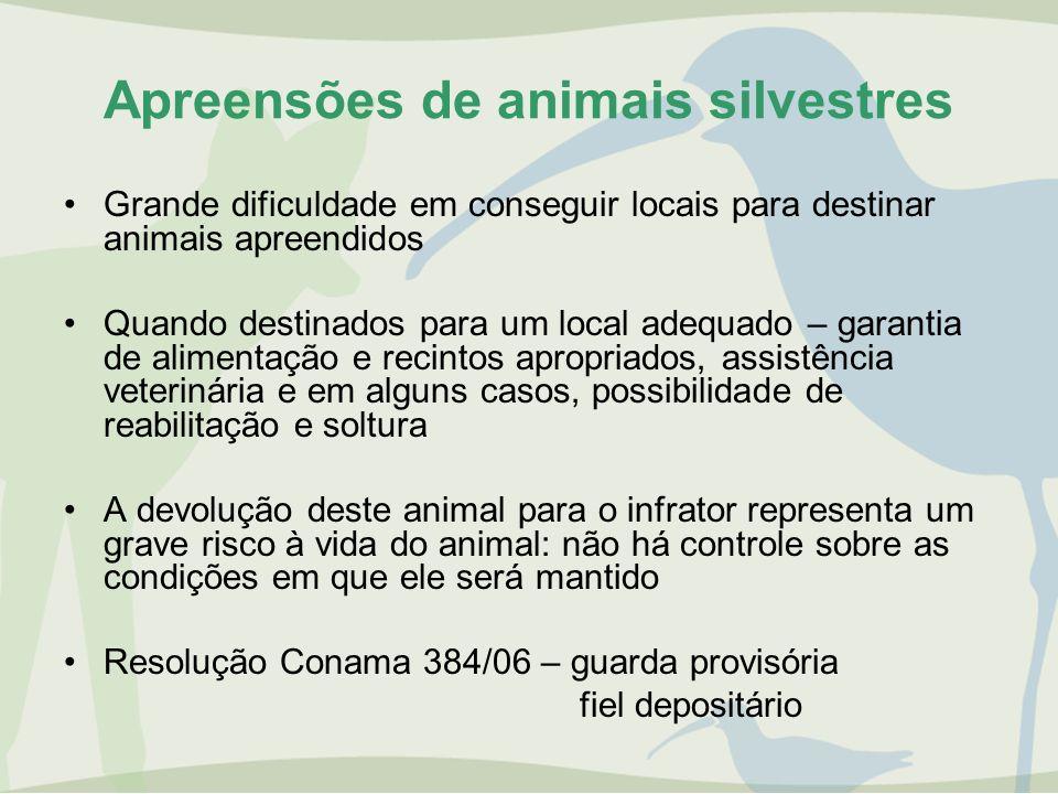 Apreensões de animais silvestres