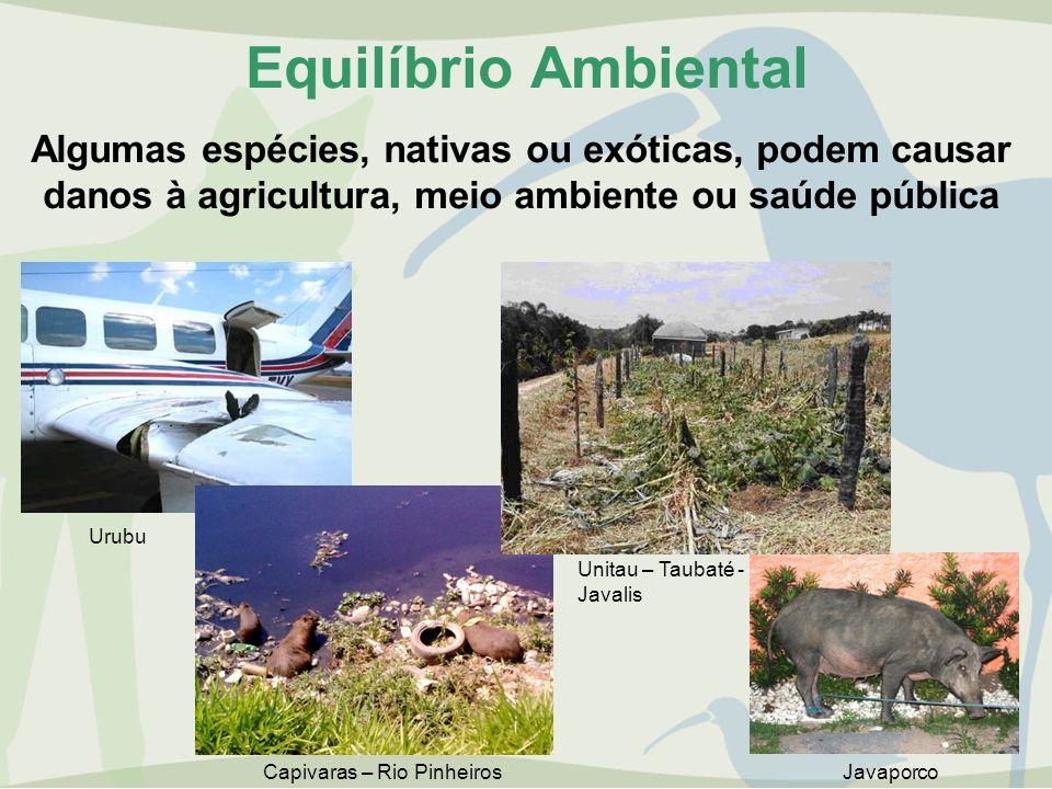 Equilíbrio Ambiental Algumas espécies, nativas ou exóticas, podem causar. danos à agricultura, meio ambiente ou saúde pública.