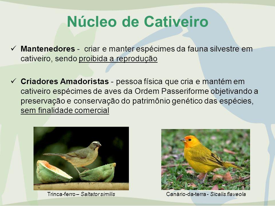 Núcleo de Cativeiro Mantenedores - criar e manter espécimes da fauna silvestre em cativeiro, sendo proibida a reprodução.