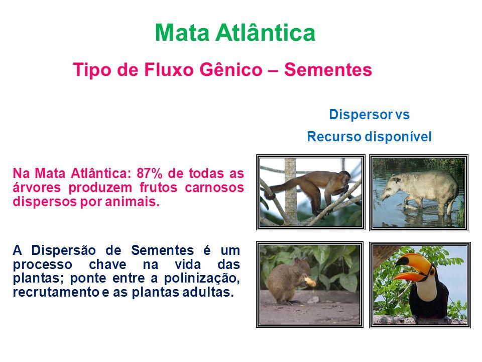 Bioma Mata Atlântica Tipo de Fluxo Gênico – Sementes Dispersor vs