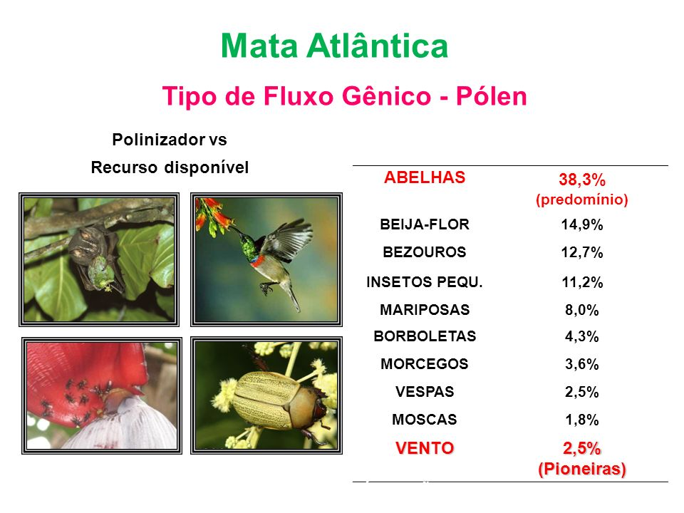 Bioma Mata Atlântica Tipo de Fluxo Gênico - Pólen