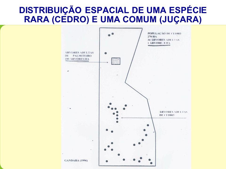 DISTRIBUIÇÃO ESPACIAL DE UMA ESPÉCIE RARA (CEDRO) E UMA COMUM (JUÇARA)