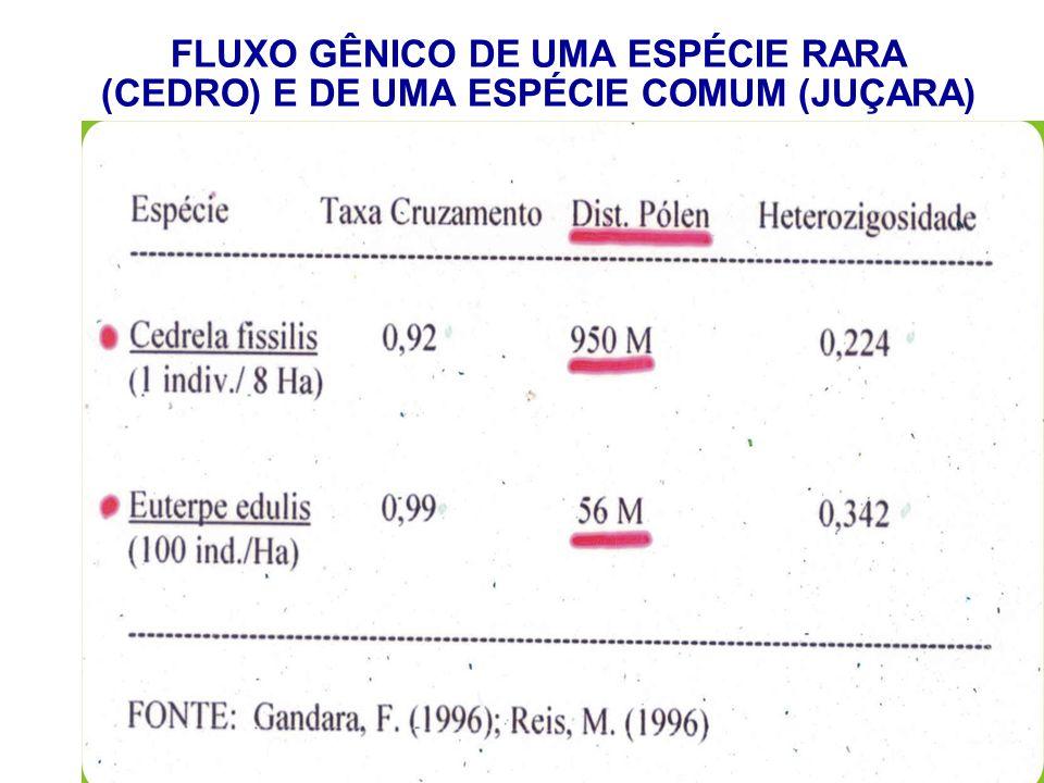 FLUXO GÊNICO DE UMA ESPÉCIE RARA (CEDRO) E DE UMA ESPÉCIE COMUM (JUÇARA)