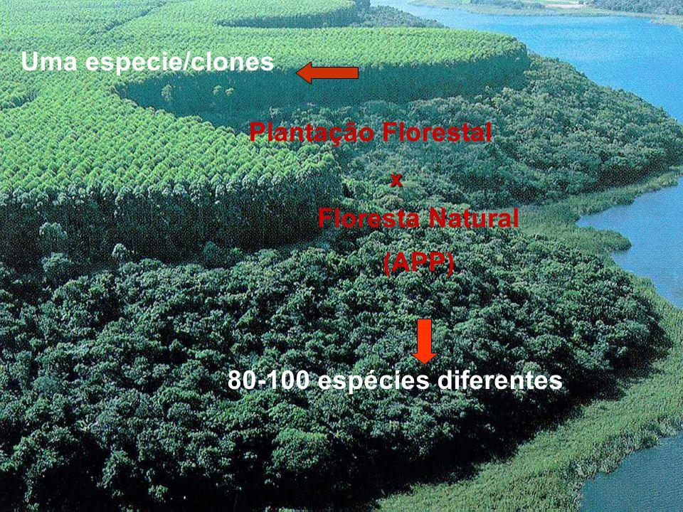 Uma especie/clones Plantação Florestal Floresta Natural (APP)