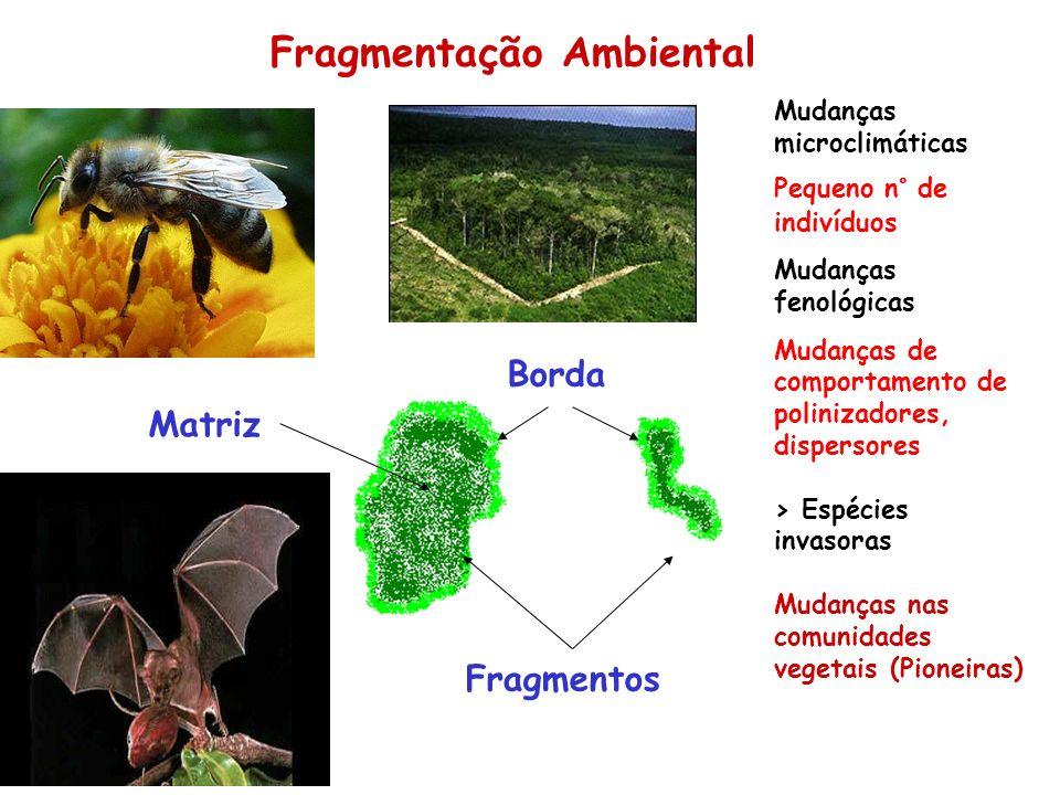 Fragmentação Ambiental