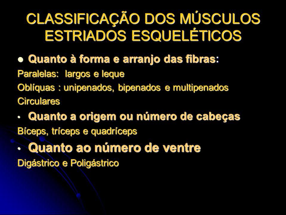 CLASSIFICAÇÃO DOS MÚSCULOS ESTRIADOS ESQUELÉTICOS