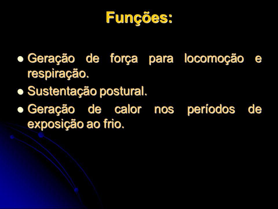 Funções: Geração de força para locomoção e respiração.