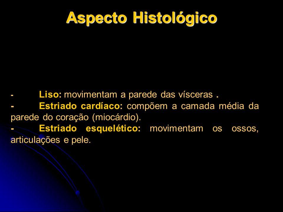 Aspecto Histológico - Liso: movimentam a parede das vísceras . - Estriado cardíaco: compõem a camada média da parede do coração (miocárdio).