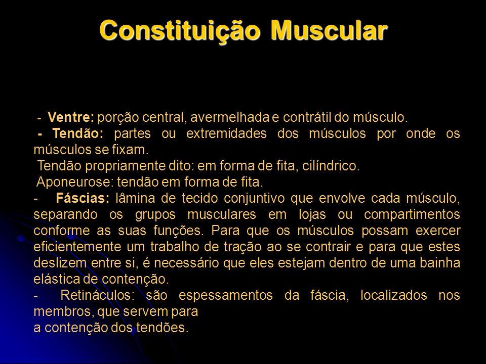 Constituição Muscular