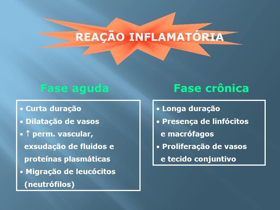 REAÇÃO INFLAMATÓRIA Fase aguda Fase crônica Curta duração