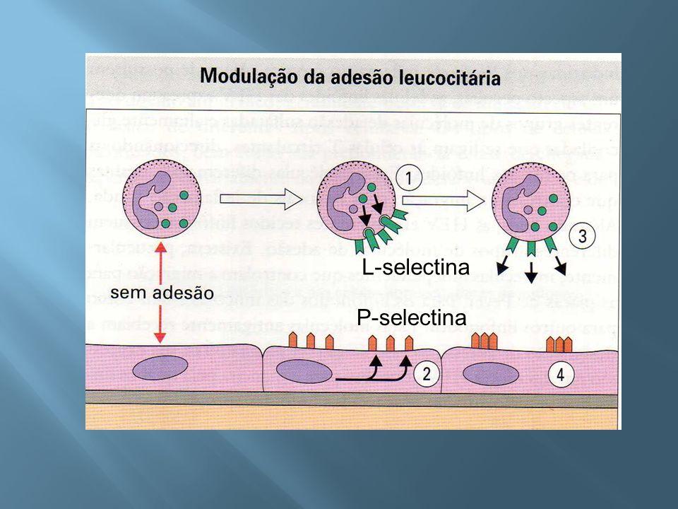 L-selectina P-selectina