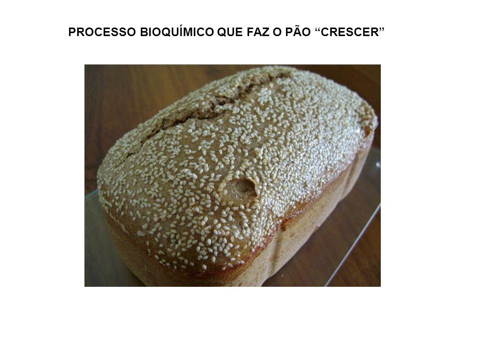 PROCESSO BIOQUÍMICO QUE FAZ O PÃO CRESCER