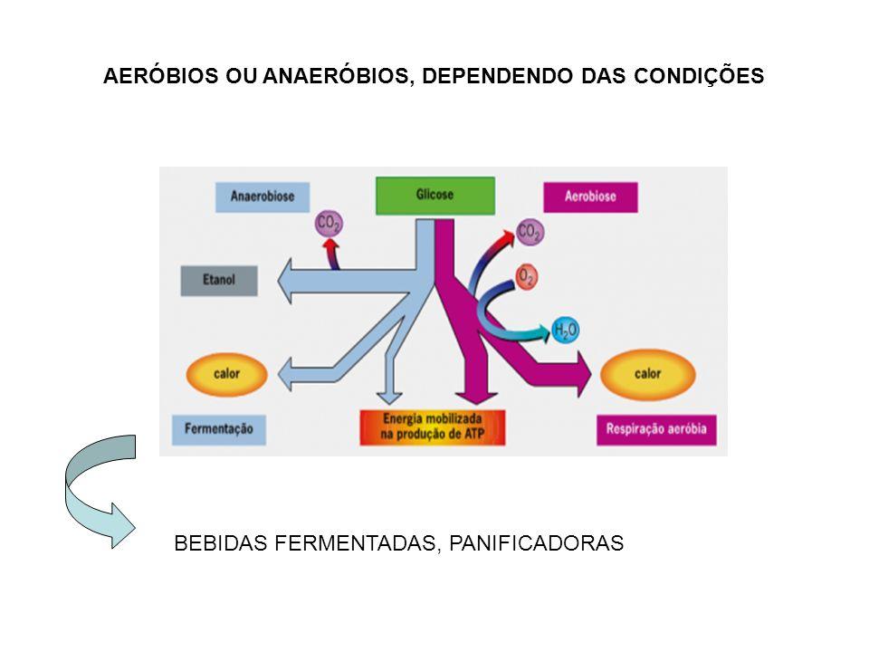 AERÓBIOS OU ANAERÓBIOS, DEPENDENDO DAS CONDIÇÕES
