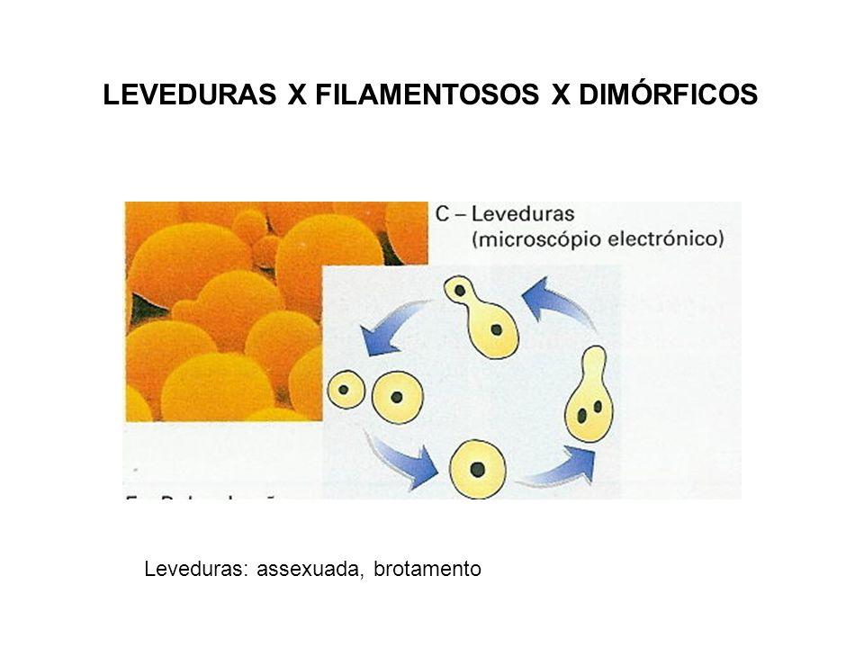 LEVEDURAS X FILAMENTOSOS X DIMÓRFICOS