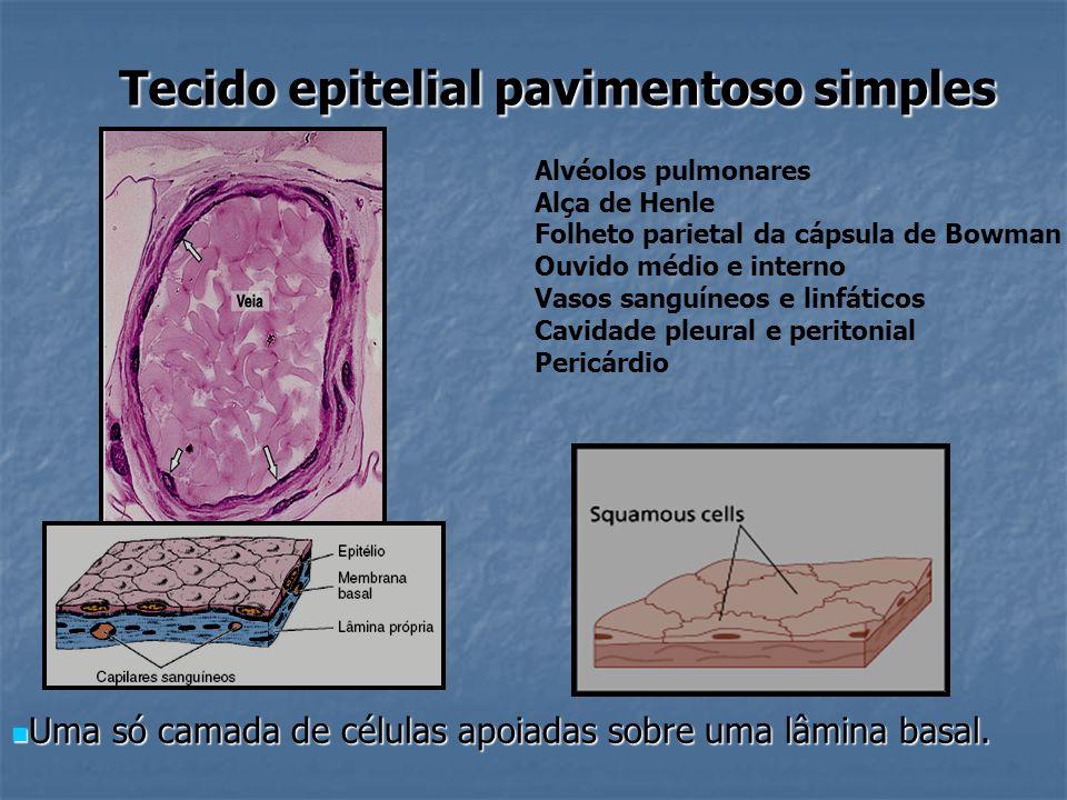 Tecido epitelial pavimentoso simples