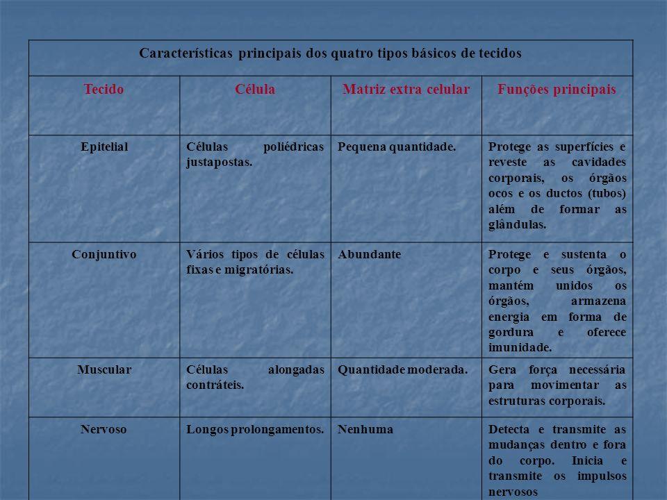 Características principais dos quatro tipos básicos de tecidos