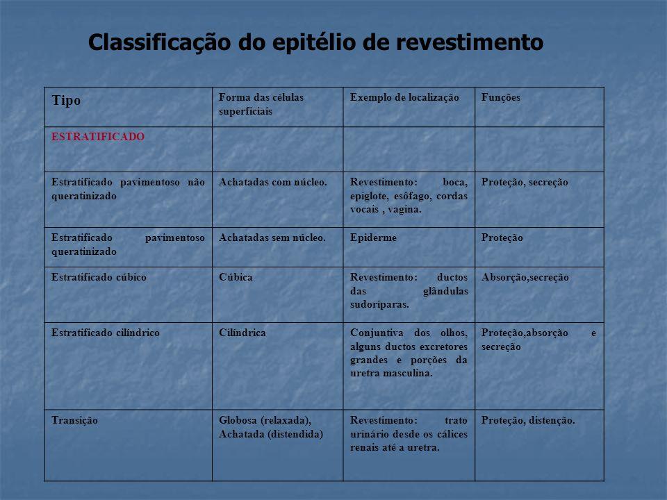 Classificação do epitélio de revestimento