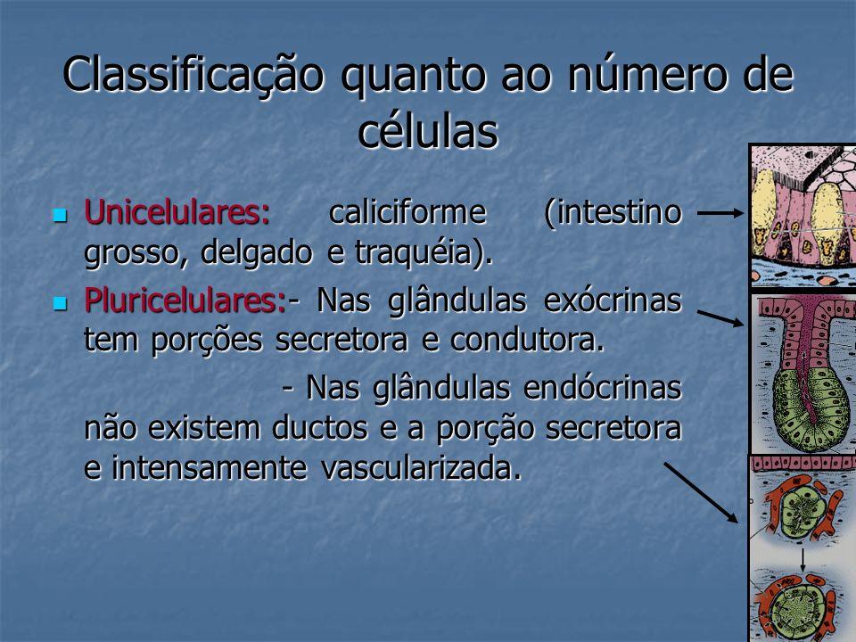 Classificação quanto ao número de células