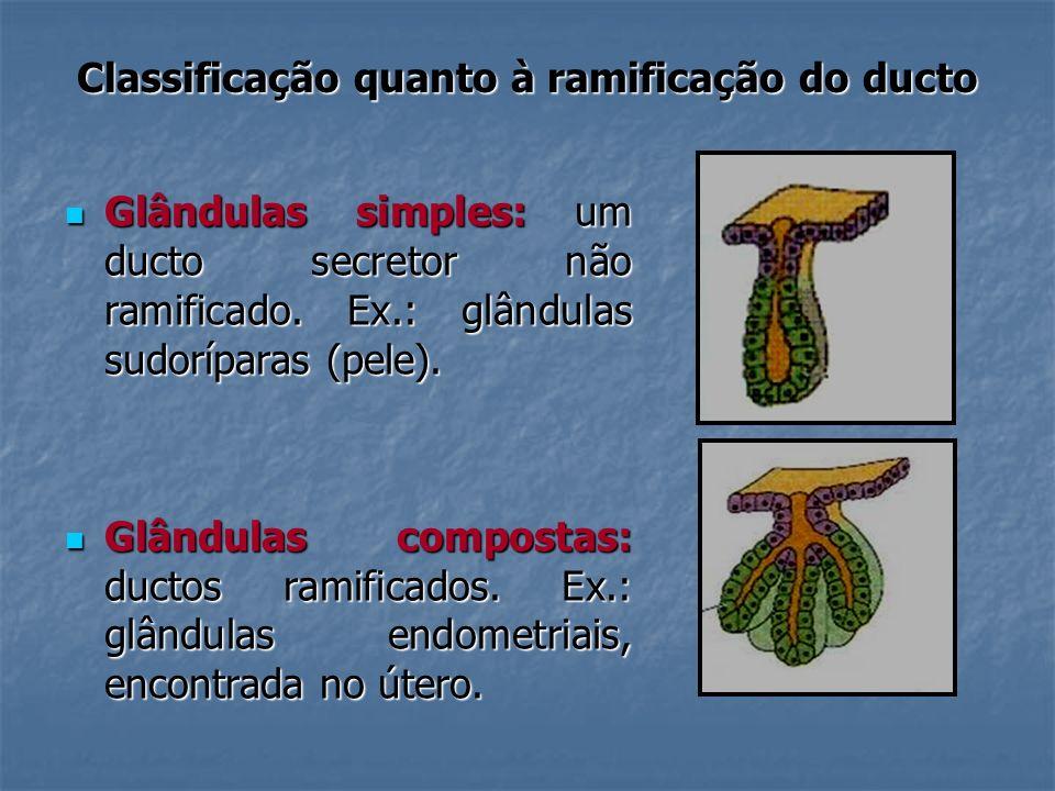 Classificação quanto à ramificação do ducto