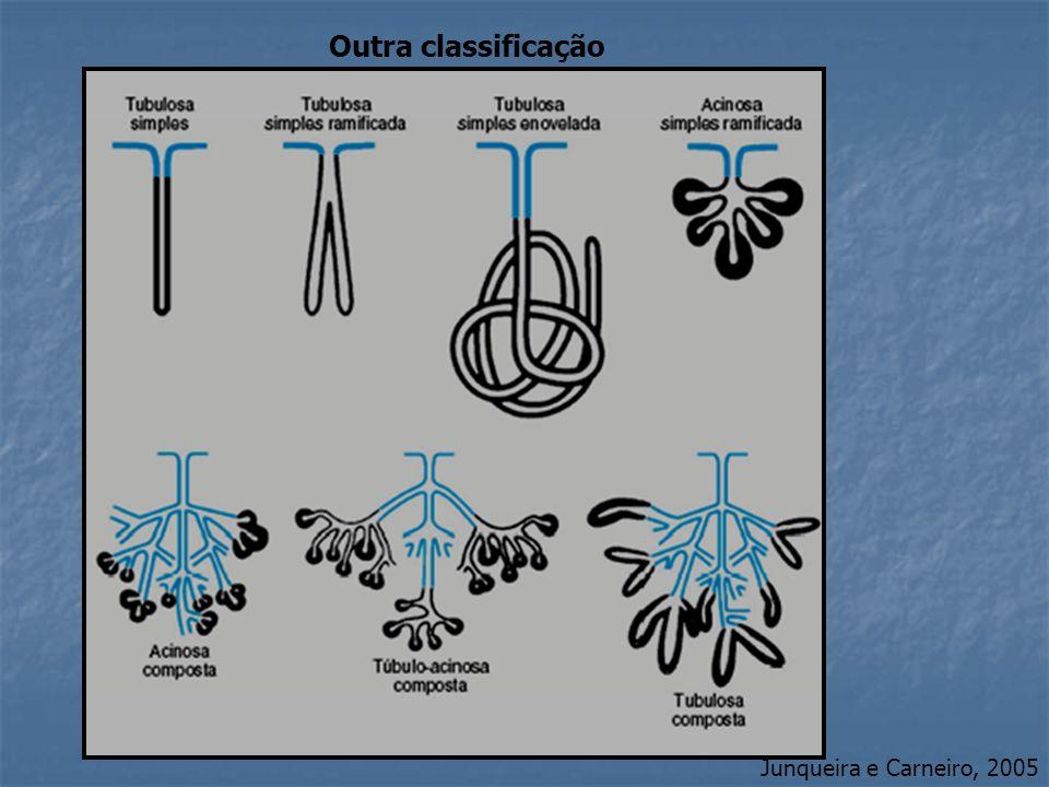 Outra classificação Junqueira e Carneiro, 2005
