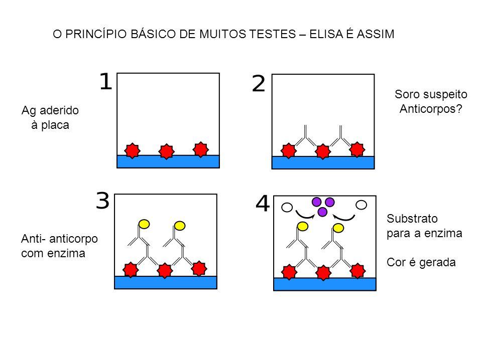 O PRINCÍPIO BÁSICO DE MUITOS TESTES – ELISA É ASSIM