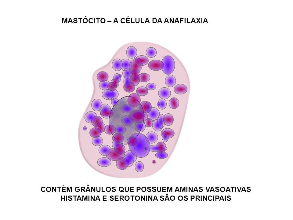 MASTÓCITO – A CÉLULA DA ANAFILAXIA