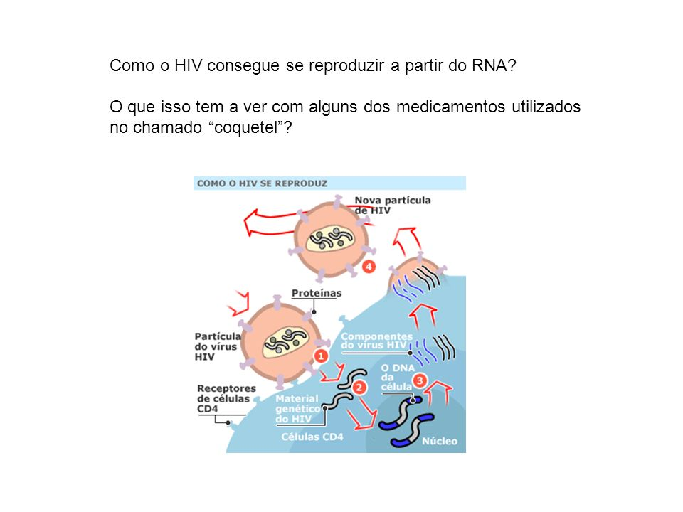 Como o HIV consegue se reproduzir a partir do RNA