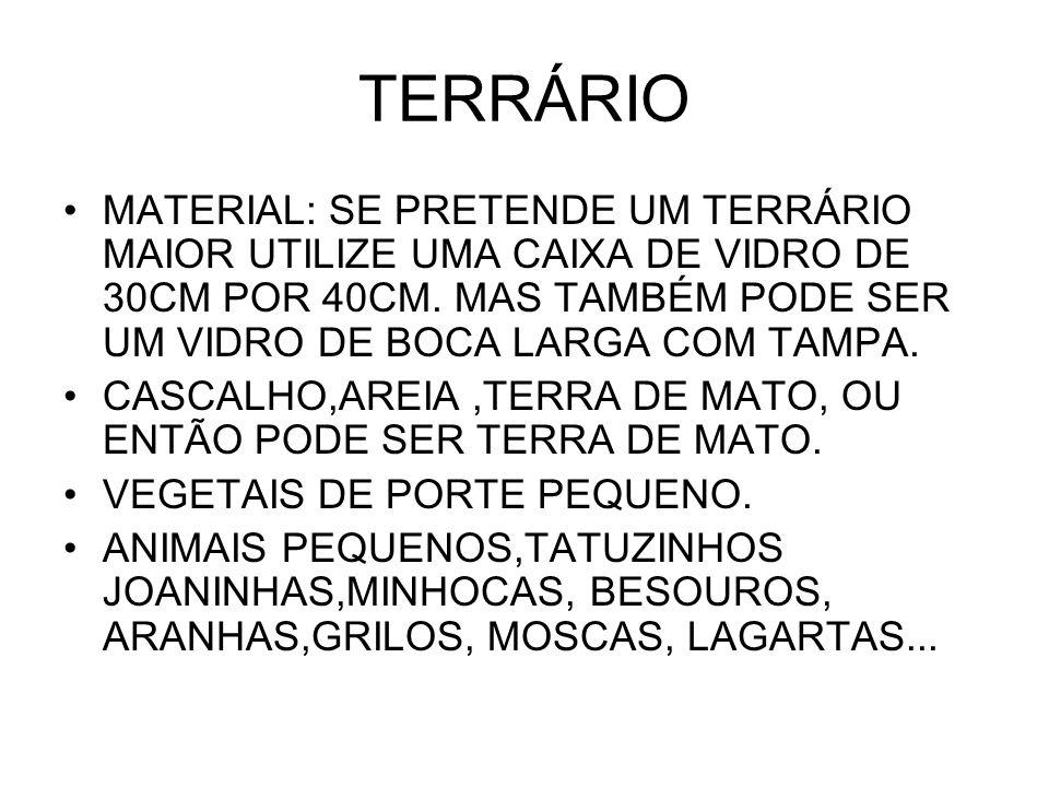 TERRÁRIO MATERIAL: SE PRETENDE UM TERRÁRIO MAIOR UTILIZE UMA CAIXA DE VIDRO DE 30CM POR 40CM. MAS TAMBÉM PODE SER UM VIDRO DE BOCA LARGA COM TAMPA.