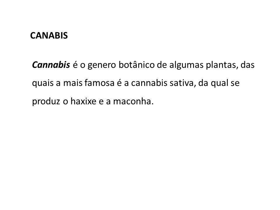 CANABISCannabis é o genero botânico de algumas plantas, das quais a mais famosa é a cannabis sativa, da qual se produz o haxixe e a maconha.