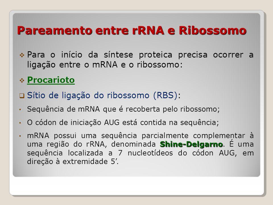 Pareamento entre rRNA e Ribossomo