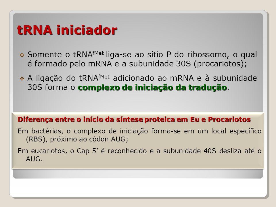 tRNA iniciador Somente o tRNAfMet liga-se ao sítio P do ribossomo, o qual é formado pelo mRNA e a subunidade 30S (procariotos);