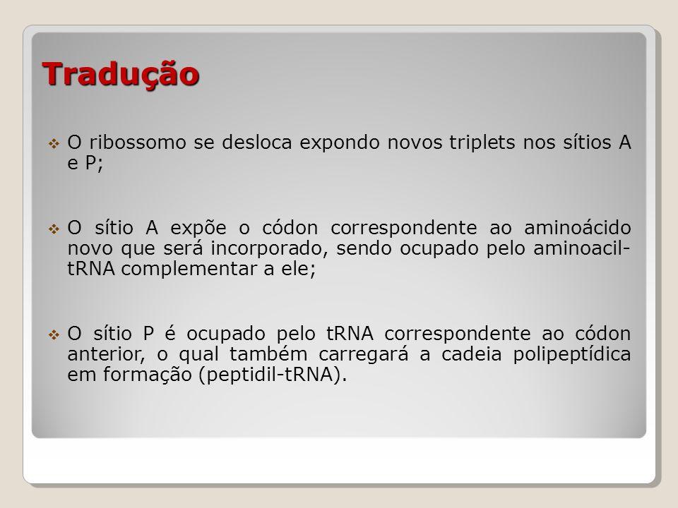 Tradução O ribossomo se desloca expondo novos triplets nos sítios A e P;